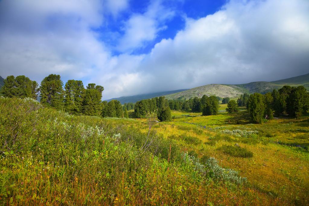 Горы Алтая — Tree photo created by bearfotos